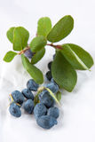 Honeysuckle leaves and berries Stock Photo