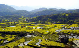 Hong Feng weir terraces rapeseed Royalty Free Stock Photos