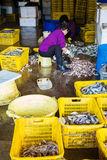 Hong Kong Aberdeen Wholesale Fish Market Stock Images