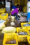 Hong Kong Aberdeen Wholesale Fish marknad Arkivbilder