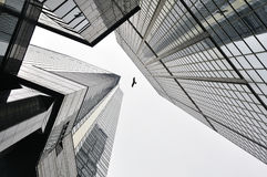 Hong Kong-birfd zwischen Wolkenkratzern lizenzfreie stockbilder