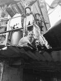 Hong Kong Cat imagens de stock royalty free