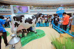 Hong Kong Dutch Lady Pure Animal Husbandry Farm event Stock Images