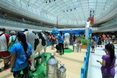 Hong Kong Dutch Lady Pure-Tierzucht-Bauernhofereignis 2015 Stockfoto
