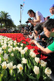 Hong Kong för 2012 blomma show Fotografering för Bildbyråer