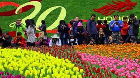 The hong kong flower show 2017 stock footage