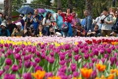 Hong Kong Flower Show 2018. People Taking Photo Of The Tulip Garden In Hong  Kong