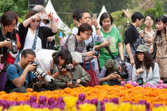 Hong Kong Flower Show. 2015 (from 20 to 29 March 2015 at Victoria Park in Causeway Bay). The  is a major event organised by the Leisure and Cultural Services Royalty Free Stock Photo