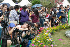 Hong Kong Flower Show. 2015 (from 20 to 29 March 2015 at Victoria Park in Causeway Bay). The  is a major event organised by the Leisure and Cultural Services Royalty Free Stock Photography