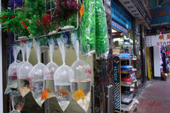 Hong Kong Gold fish market in Tung Choi street Royalty Free Stock Photos