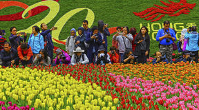 Hong kong international flower show 2017. Busy group of photographers at the tulips field displayed at hong kong international flower show 2017.  location Stock Image