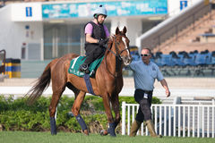 Hong Kong International Races Morning Trackwork Fotografie Stock Libere da Diritti