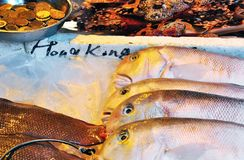Fresh Fish at Hong Kong wet market stock images