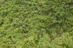 Hong Kong natura Zdjęcia Stock