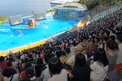 Hong Kong : Ocean Park Royalty Free Stock Photo