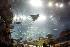 Hong-Kong: Parque del océano imagen de archivo libre de regalías