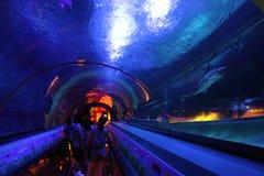Hong Kong: Parque do oceano imagem de stock royalty free