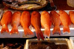 Hong Kong: Red Snapper Fish Stock Images