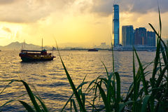 Hong Kong sunset. Skyline with grass silhouette in the front royalty free stock photo