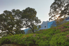Hong Kong University de la science et technologie