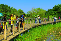 Hong kong wetland park. Active visitors enjoying the scenic view from the wooden walkway at the wetland park in hong kong Stock Image