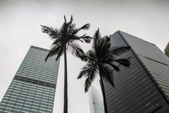 Hong Kong, wolkenkrabbers en palmen Royalty-vrije Stock Fotografie