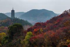 Hong Ye Gu, или красная долина в осени, Jinan лист стоковые фото