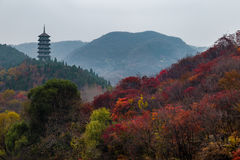 Hong Ye Gu, ou vallée rouge de feuille en automne, Jinan Photos stock