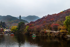 Hong Ye Gu, or Red leaf valley in Autumn, Jinan. Hong Ye Gu, or Red leaf valley in Autumn, located near Jinan, is one of the 10 new famous tourist attractions of Royalty Free Stock Photo