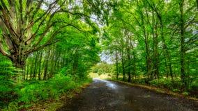 Hongaars bos Stock Fotografie