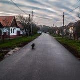 Hongaarse Dorpsstraat met hond het lopen royalty-vrije stock afbeeldingen
