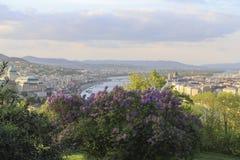Hongarije, bloeiende lilac struiken en mening van Gellert-heuvel op Stock Afbeelding