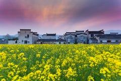 Hongcun canola flower field sunset Stock Photos