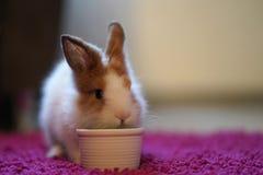 Hongerig Bunny With een Kom met Favoriet behandelt royalty-vrije stock foto's