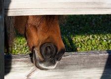 Hongerig paard Royalty-vrije Stock Afbeelding