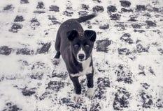 Hongerig puppy Royalty-vrije Stock Afbeeldingen