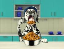 Hongerige Dalmatische hond die droog voedsel gaan eten stock foto