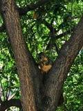 Hongerige Eekhoorn stock afbeelding
