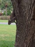 Hongerige Eekhoorn Royalty-vrije Stock Foto's