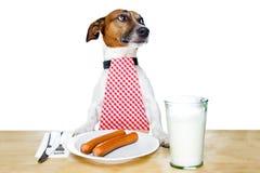 Hongerige hond Stock Foto