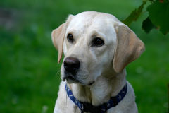Hongerige Hond royalty-vrije stock afbeelding