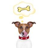 Hongerige Hond Stock Fotografie