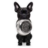 Hongerige hond met kom stock foto's