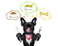 Hongerige hond met toespraakbel Stock Afbeelding