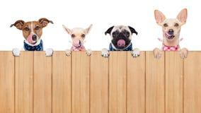 Hongerige honden Stock Foto's