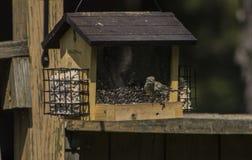 Hongerige hongerige vogeltjes Stock Foto's