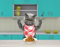 Hongerige kat met mes en vork voor dinerzitting bij de lijst en het gaan droog voedsel eten royalty-vrije stock foto
