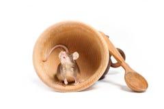 Hongerige muis in een lege houten kom Stock Foto's