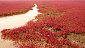 HongHaiTan (playa roja) Foto de archivo libre de regalías