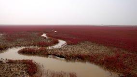 HongHaiTan (praia vermelha) imagem de stock royalty free